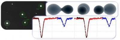 Curva di luce e modello di una stella binaria ad eclisse