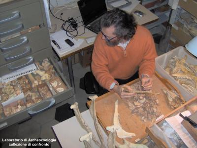 Laboratorio di Archeozoologia: collezioni di confronto