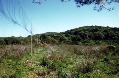Reti mist nets utilizzate dai biologi per catturare uccelli selvatici nei progetti di ricerca.