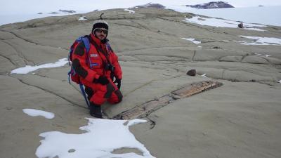 fossilised trunk, Antarctica
