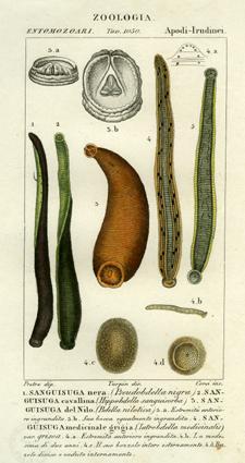 Tavola 1050 del Dizionario delle Scienze Naturali
